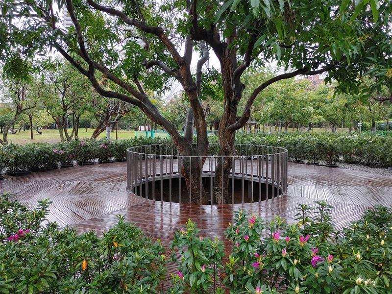 大安森林公園打卡新秘境 杜鵑冶園2月底開放2